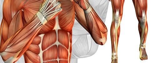 Co lubią nasze mięśnie?