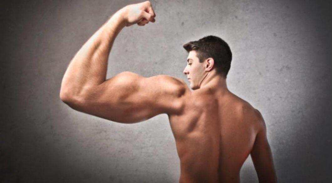 Anatomia. Dwugłowy ramienia