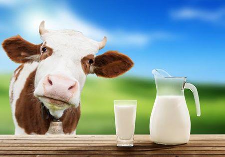 Pij mleko, będziesz WIELKI?